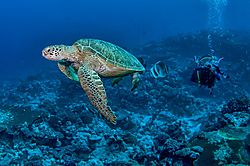 2Q_underwater_Marjani.jpg