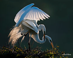 february_wildlife_dda53.jpg