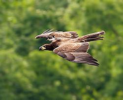 july_wildlife_eaphoto.jpg
