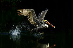 june_wildlife_slopoki1.jpg