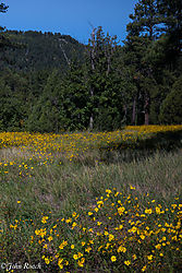 Field_of_Yellow_Near_Oak_Creek_Canyon.jpg