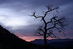 Spooky_Tree_Sedona_Az_JDD8444sgnd_resize.jpg