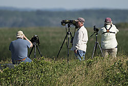 DSC_9551_-_Bird_Watchers_V2.jpg