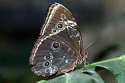 Butterfly_032821.jpg
