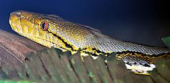 snake-03.jpg