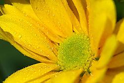Flowers-3366.jpg