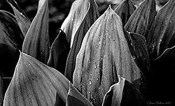Leaves_in_Sun.JPG