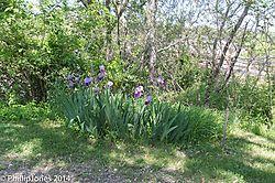 DSC_008632.jpg
