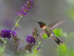 natureday_birdied.jpg