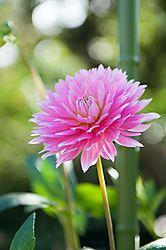 Enders_Island_Flowers.jpg