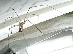 spider36.jpg