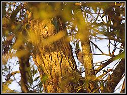 woodpecker_2.jpg