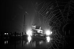 Spider_Light_Night_Mood.jpg