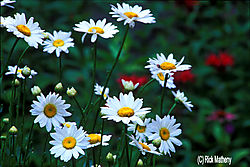 12017Ines_Secret_Garden4_psd.jpg