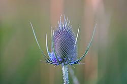 Weeds-4.jpg
