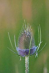 Weeds-5.jpg