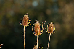 Weeds-6.jpg