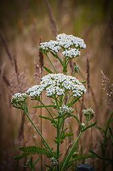 Weeds21.jpg