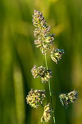 Weeds31.jpg