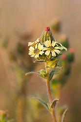 Weeds4.jpg