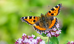 The-Pollinator.jpg