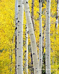 Rocky_Mountain_National_Park_10-1-2014_1930.jpg