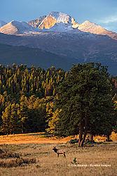 Rocky_Mountain_National_Park_9-29-2014_669.jpg