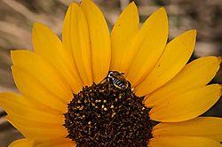 Busy_Bee5.jpg