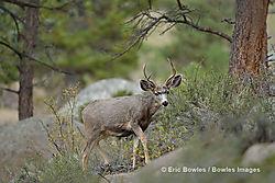 Rocky_Mountain_National_Park_10-1-2014_1790.jpg