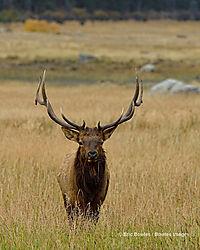 Rocky_Mountain_National_Park_9-28-2014_593.jpg