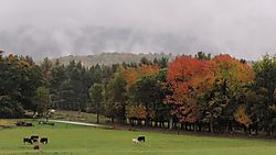 dscn2682_1500_16-9_pastoral-foliage-fog.jpg