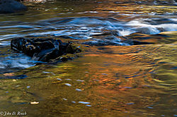 Autumn_flow_and_swirl1.jpg