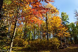 Colors_of_Autumn_31.jpg