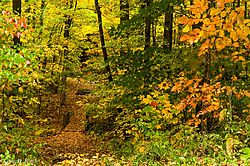Fall_in_the_Woods_2.jpg