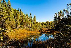 Forest_Bog_in_Autumn.jpg
