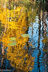 Lily_Pads_and_Color-1513.jpg