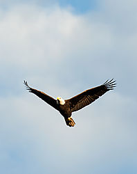 11-01-14_Eagles_122.jpg