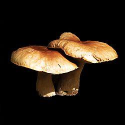 DSC0628_Mushroom_Test_V2_for_Posting.jpg
