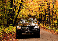 DSC_9017_Benz_with_Trees.jpg