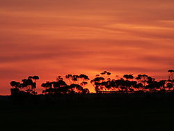 Sunset1_2_.JPG