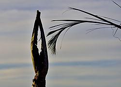 The_dry_palm_pray.jpg
