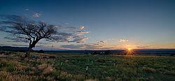 Taos_Tree-162.jpg