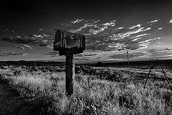 Taos_Tree-66-Edit-Edit.jpg