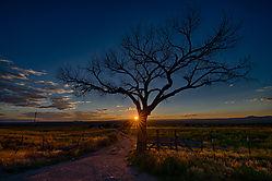 Taos_Tree-95-2.jpg