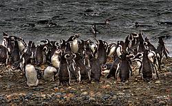 Flash_Mob_Patagonian_Style.jpg