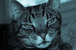 ReiCyanotypeTonePreset-4.jpg