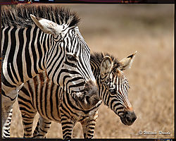 Nairobi_National_Park_LR-29_DxO-1.jpg