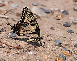 20120714-DSC_3406-Butterfly.jpg