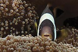 Nemo1.jpg