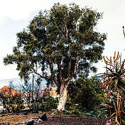 Madeira-3796_Kopie.jpg